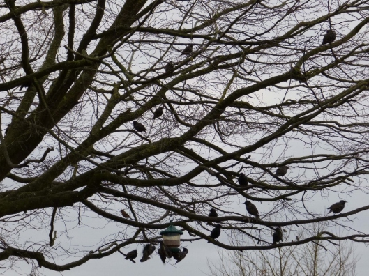 Congregating in the hornbeam