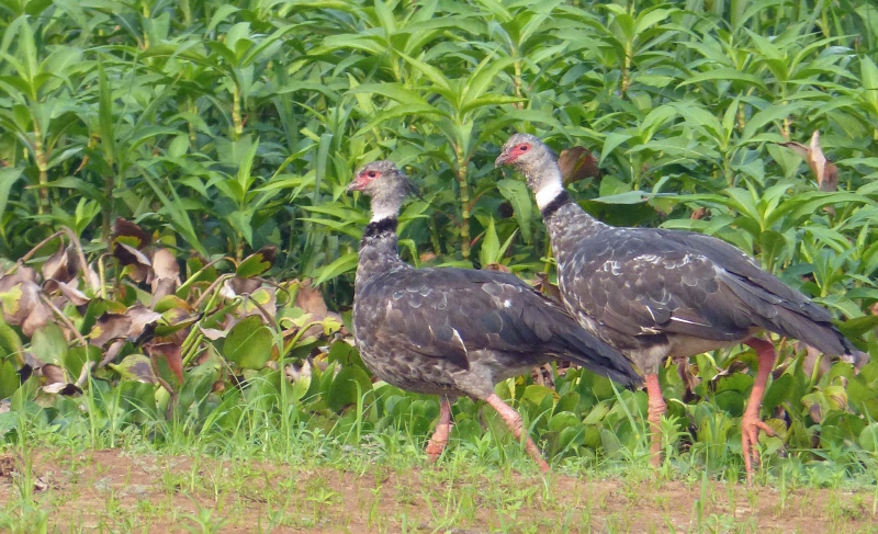 Mr and Mrs Southern screamer