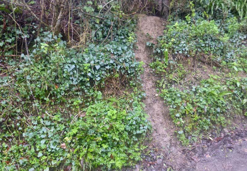 No doubt a badger track