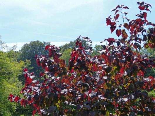 Dyrham Park 14